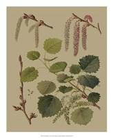 Forest Foliage IV Fine-Art Print