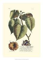 Royal Botanical I Fine-Art Print