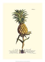 Royal Botanical II Fine-Art Print