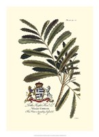 Royal Botanical III Fine-Art Print