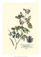Royal Botanical IV Fine-Art Print