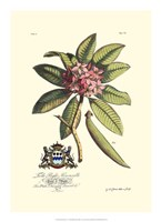 Royal Botanical V Fine-Art Print