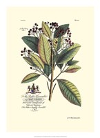 Royal Botanical VI Fine-Art Print