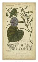 Floral Botanica I Fine-Art Print