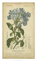Floral Botanica II Fine-Art Print