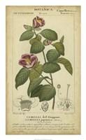 Floral Botanica III Fine-Art Print