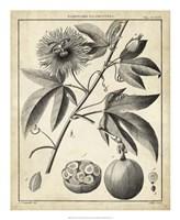 Passiflora I Fine-Art Print