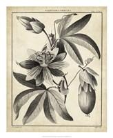 Passiflora III Fine-Art Print