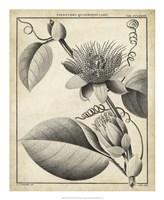 Passiflora IV Fine-Art Print