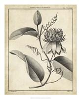 Passiflora V Fine-Art Print