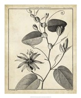 Passiflora VI Fine-Art Print