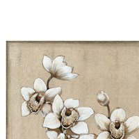 White Orchid I Fine-Art Print