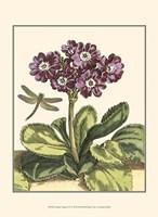 Garden Vignette IV Fine-Art Print