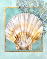 Scallop Shell and Coral Fine-Art Print