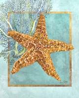 Starfish and Coral Fine-Art Print