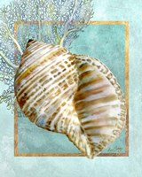 Turban Shell and Coral Fine-Art Print