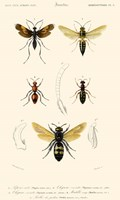 Antique Bees I Fine-Art Print