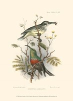 Birds in Nature I Fine-Art Print
