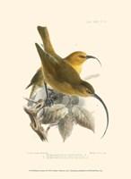 Birds in Nature II Fine-Art Print