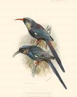 Birds in Nature III Fine-Art Print