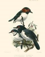 Birds in Nature IV Fine-Art Print