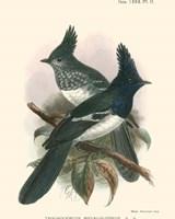 Birds in Nature V Fine-Art Print