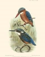 Birds in Nature VI Fine-Art Print