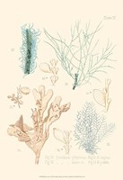 Delicate Coral I Fine-Art Print