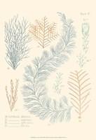 Delicate Coral II Fine-Art Print