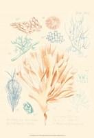 Delicate Coral IV Fine-Art Print