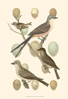 British Birds and Eggs I Fine-Art Print