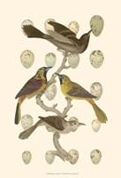 British Birds and Eggs II Fine-Art Print