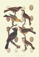 British Birds and Eggs III Fine-Art Print
