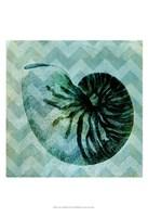 Chevron Shell IX Fine-Art Print