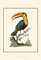 The Toco Toucan Fine-Art Print