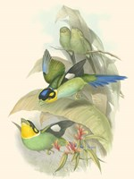 Small Birds of Tropics I Fine-Art Print