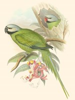 Small Birds of Tropics II Fine-Art Print