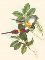 Small Birds of Tropics III Fine-Art Print