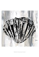 Black Shell II Fine-Art Print