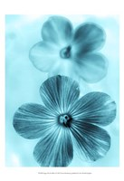 Forget Me Not Blue I Fine-Art Print