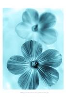 Forget Me Not Blue I Fine-Art Print