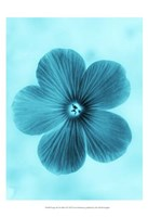 Forget Me Not Blue II Fine-Art Print
