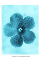 Forget Me Not Blue II Fine-Art Print
