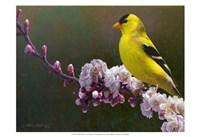 Goldfinch Flowers Fine-Art Print