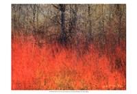 Red Grass II Fine-Art Print