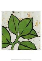 Planta Green III Fine-Art Print