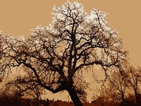 Oak Tree on Tope Fine-Art Print