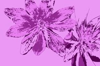 Pink Anemone Fine-Art Print
