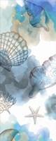 Shell Reflections I - Mini Fine-Art Print