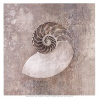 Nautilus I Wall Poster